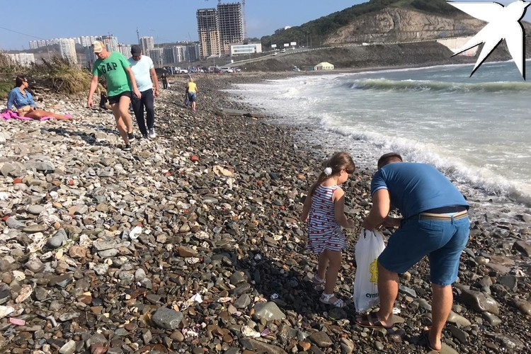 Берег усыпан моллюсками