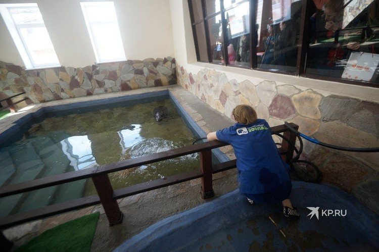 У Евы в зоопарке свой персональный бассейн.