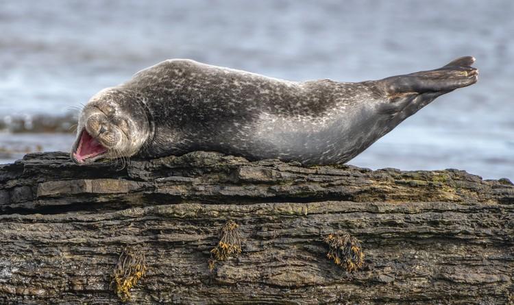 Смех. Кейтнесс, Шотландия. Фото: Ken Crossan/Comedy Wildlife Photography Awards
