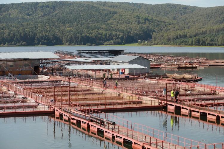 Это завод по выращиванию рыбы на Красноярском водохранилище. На Таймыре можно построить подобный