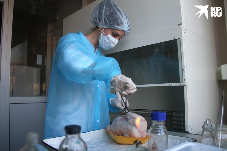 Курицу исследовали на «чистоту», и в половине упаковок обнаружили патогены.
