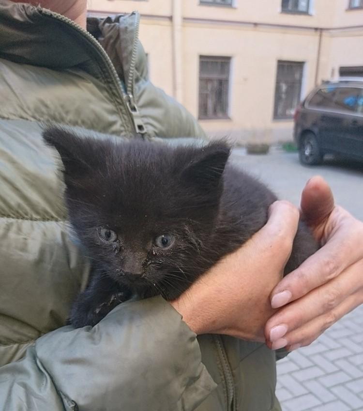 Малыша забрала к себе заявительница. Фото: vk.com/koshkispas