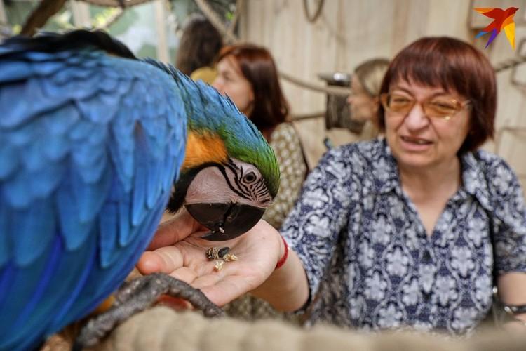 Яркие ара облепливают руку, если в ней есть корм.