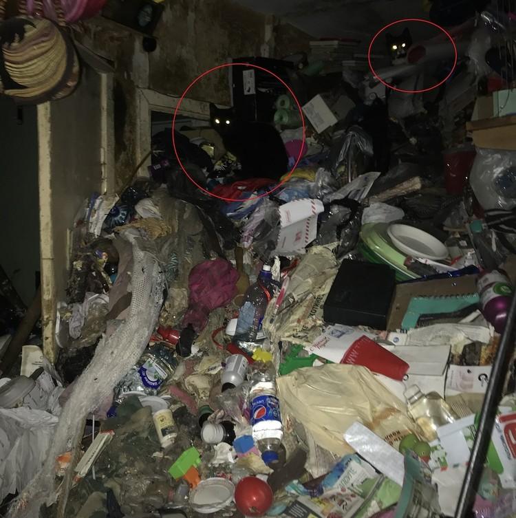На горе мусора нашли кошек. А хозяев - пока нет. Фото: vk.com/kupchinonews / Владимир Юдин