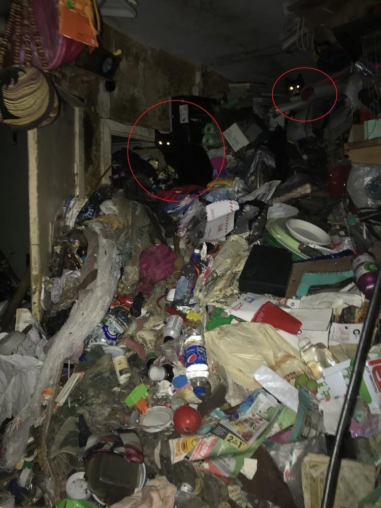 Кошки жили запертыми в горе мусора Фото: vk.com/kupchinonews