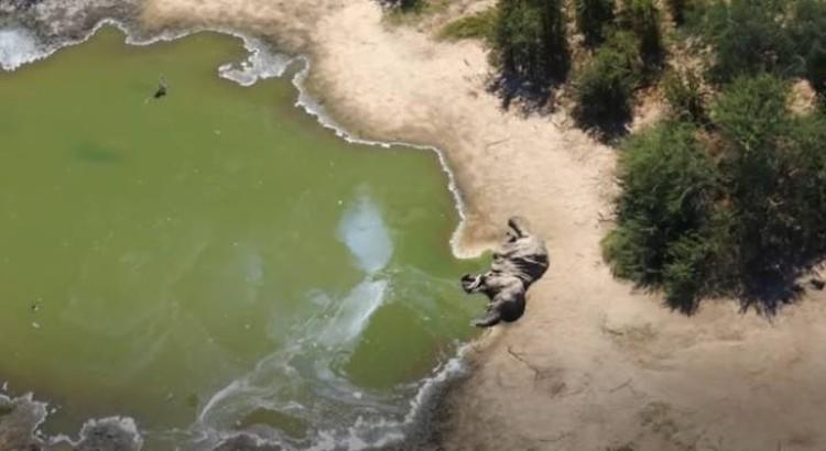 Погибших слонов часто находили у источников воды.
