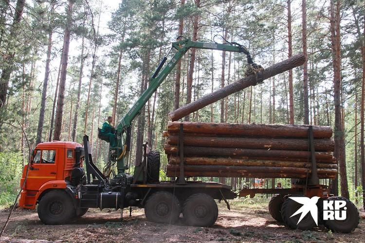 Между лесопромышленниками и местными жителями по всей стране идет малая отечественная война