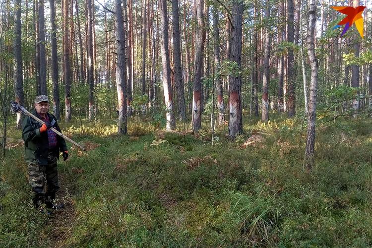 Лес похож на декорации к фильму про языческое племя, вот только вместо жреца в белом по нему ходит мужчина в спецодежде - вздымщик Александр Рихтиков.