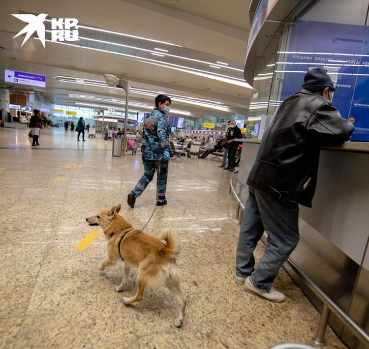 Рабочий день собаки длится восемь часов, но каждые 40 минут нужен перерыв.