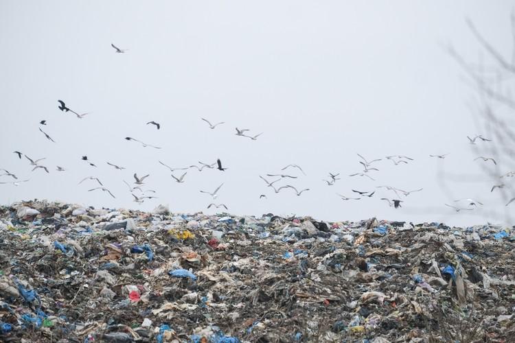 Решения по переработке мусора Ленобласть будет разрабатывать вместе с Петербургом