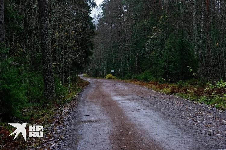Дорога плавно переходит в лес, за которым тот самый берег реки