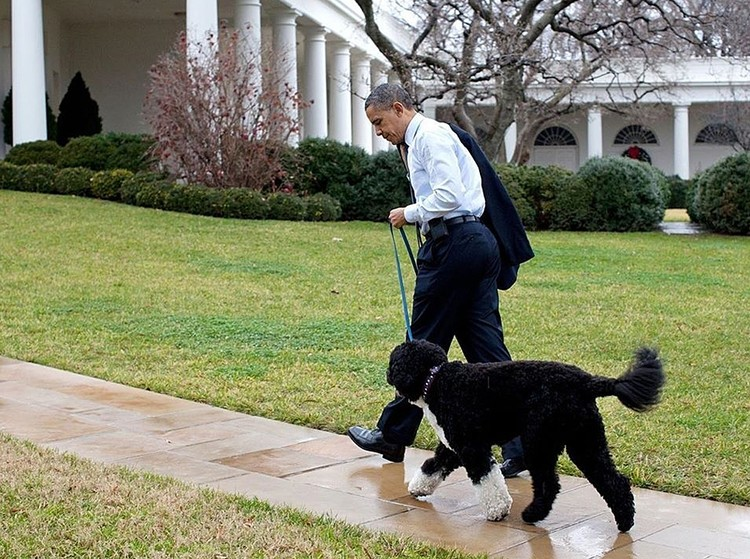 Барак Обама долго обещал своим дочерям щенка