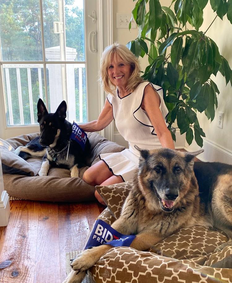 Супруга Джо Байдена Джилл с их овчарками, псов зовут Мэйджор и Чемп.