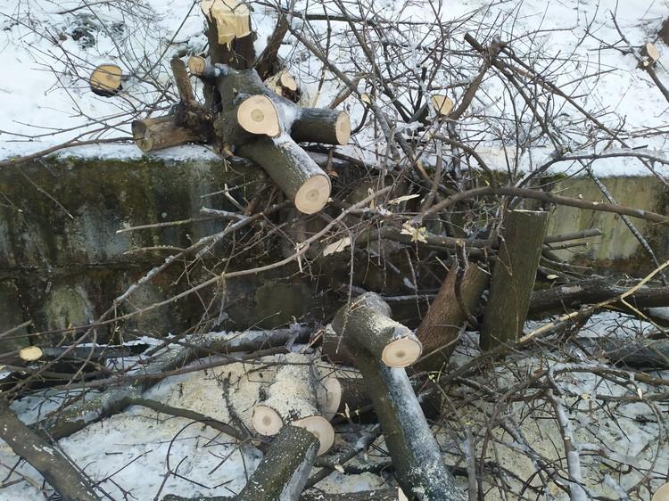 Арендованная территория завалена стволами деревьев