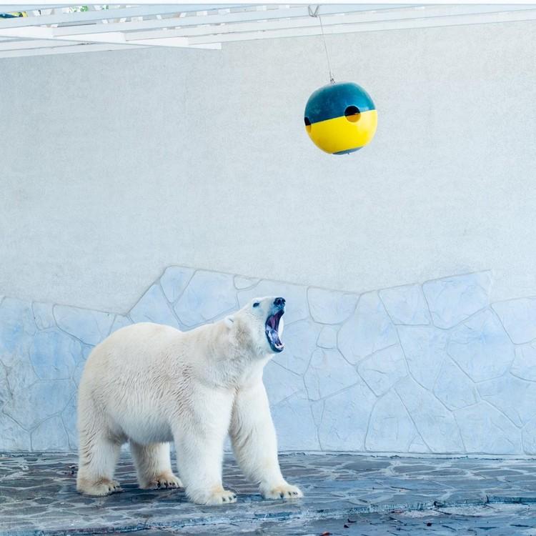 Игривое настроение сохраняется у медведя круглый год. Фото: ростовский зоопарк