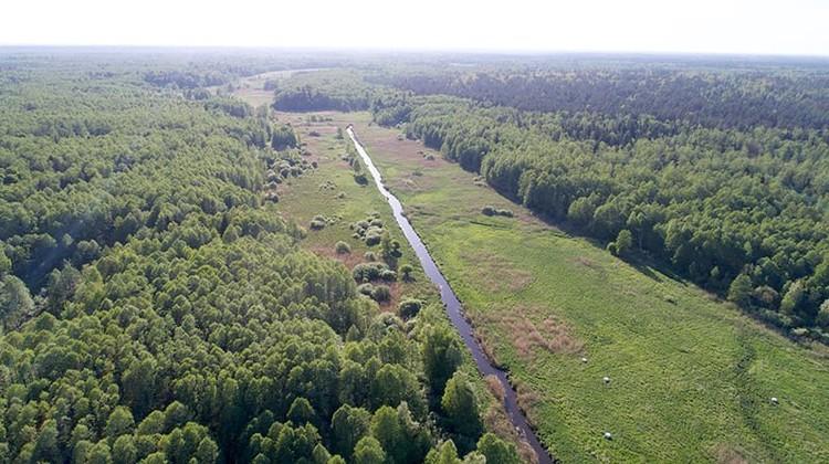 Река Наревка была спрямлена, но естественное русло - извилистое. Его специалисты хотят вернуть. Фото: Daniel Rosengren