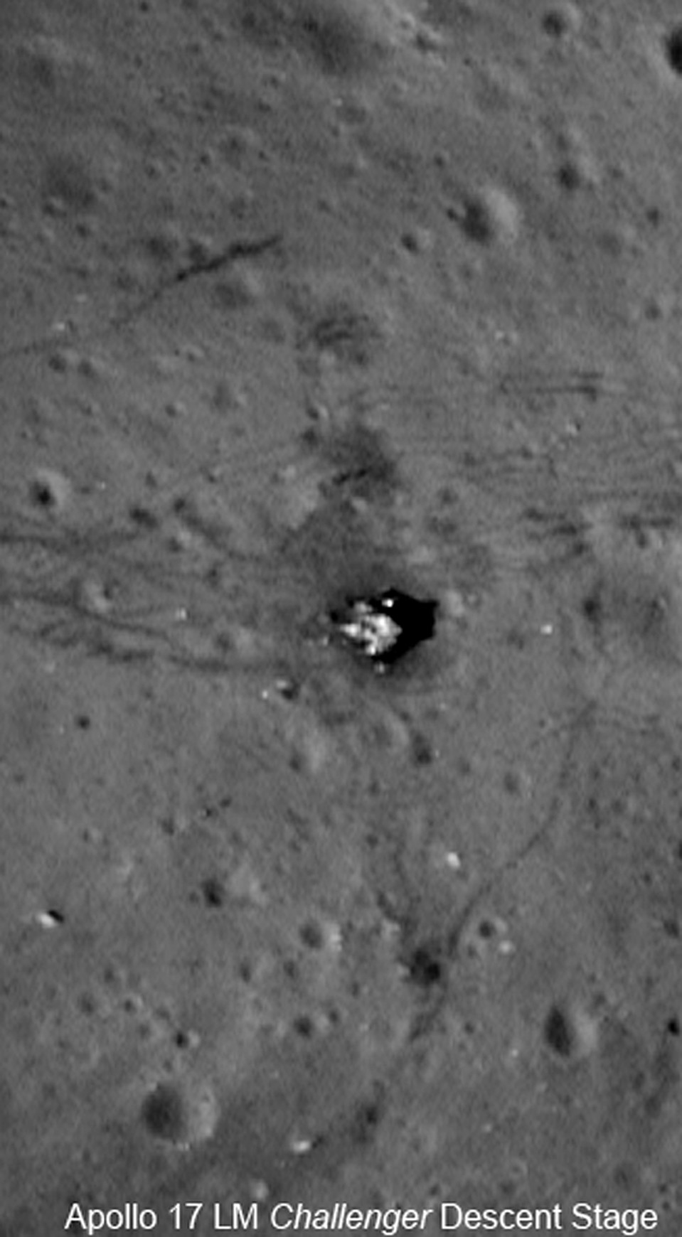 невелики, фото посадок аполлонов рынки для