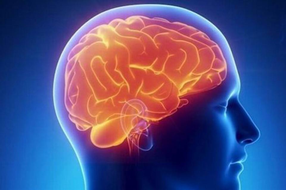 Клетки мозга на 60% состоят из жира.