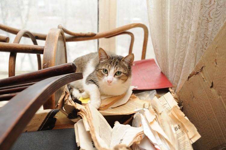 Юрий Ефимович очень любил кошек. У него их было три. Сейчас они остались без хозяина.