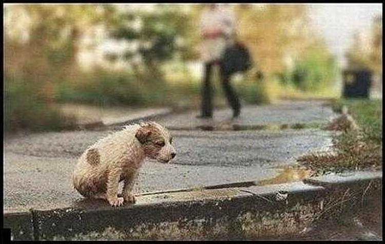 В последнее время пристроить собаку с улицы все сложнее