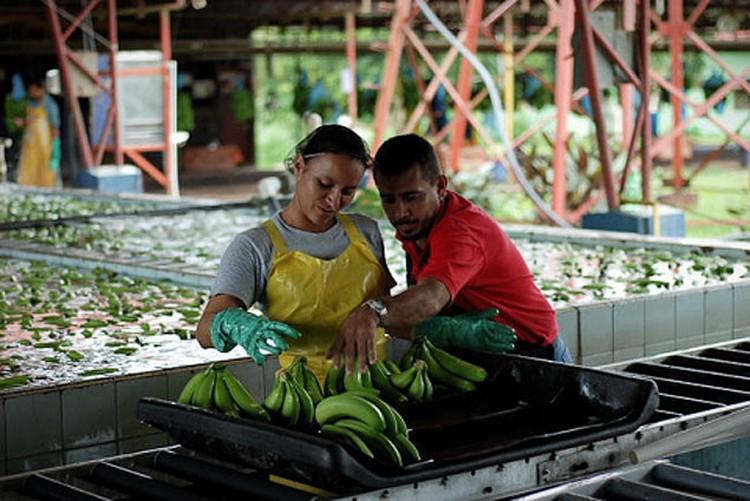 Экспорт бананов - ключевой сектор экономики страны.