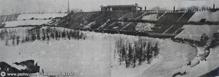 """Для маскировки во время войны на """"Динамо"""" посадили ели."""