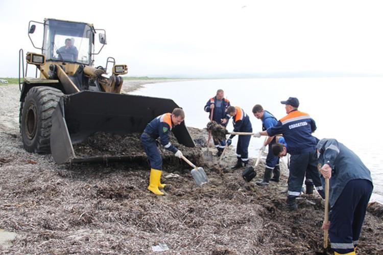 Берег в Хасанском районе чистят спасатели...