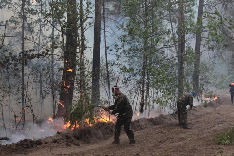 Больше 70 работников лесхоза тушили пламя в самом лесу. Фото: МЧС.