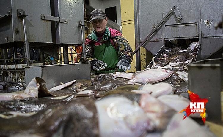 У рыбных заводов появились новые проблемы - дорогие кредиты, банки предлагают от 20% и выше, если есть что в залог оставить.