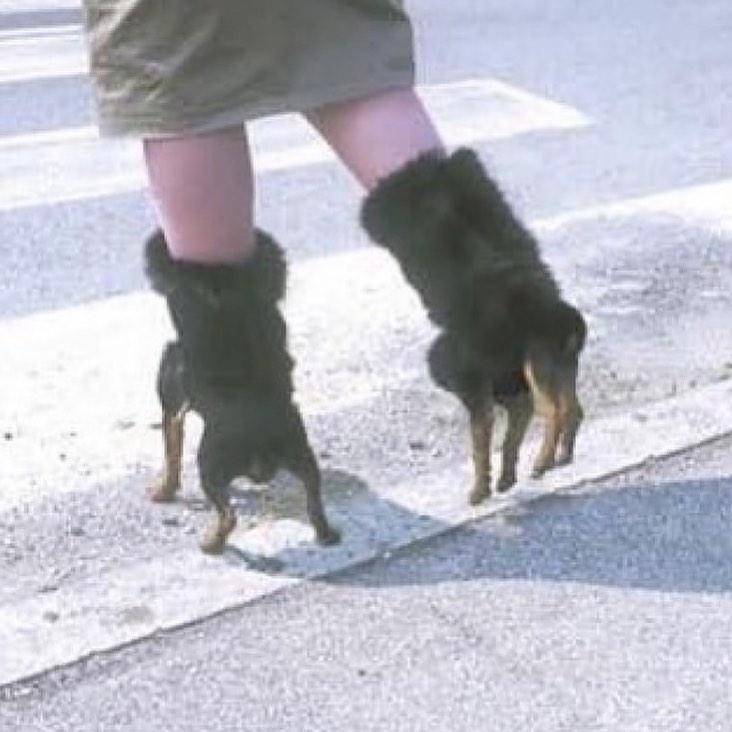 Сапоги в виде маленьких собачек